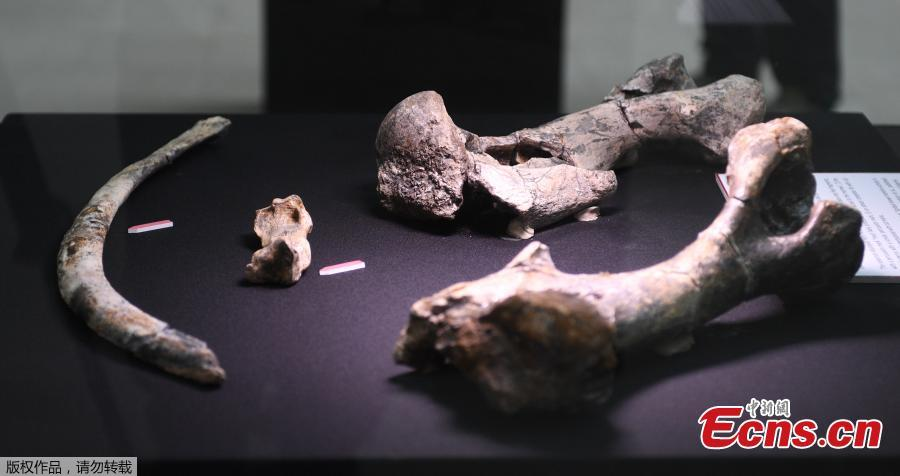 Butchered rhino suggests humans lived in the Philippines 700,000 years ago