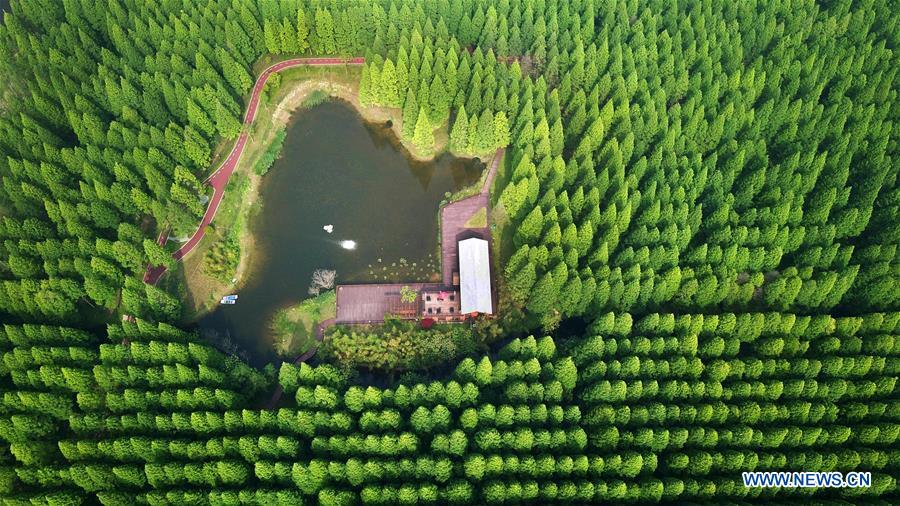 Scenery of Yellow Sea National Forest Park in Jiangsu