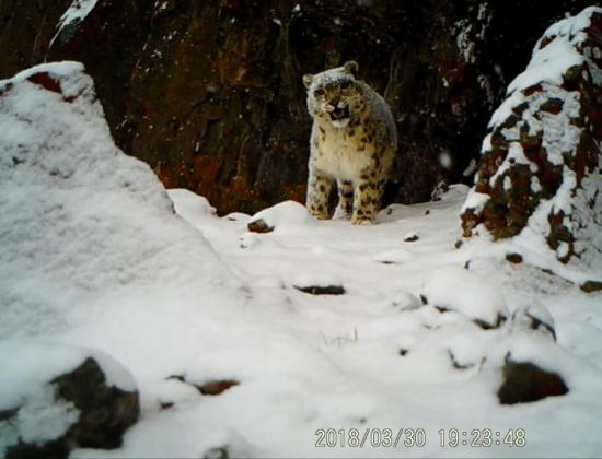 Rare wild animals spotted in Tibetan nature reserve