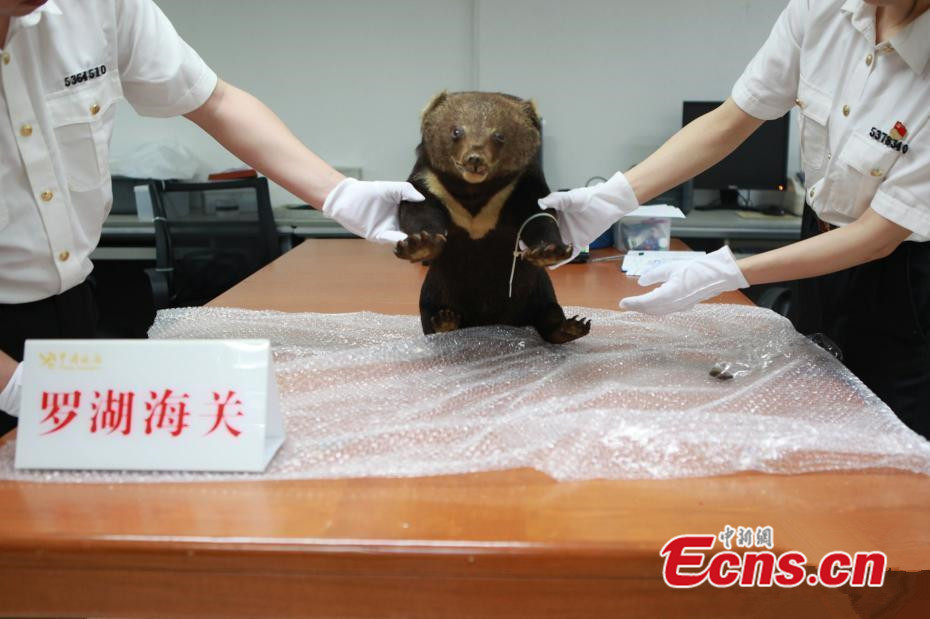 Shenzhen customs seizes black bear specimen