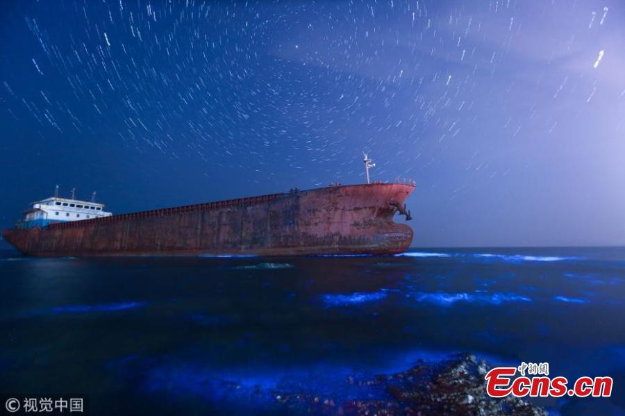 Sea turns fluorescent in Dalian, Northeast China