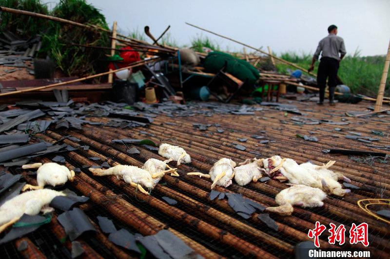 Guangdong foshan