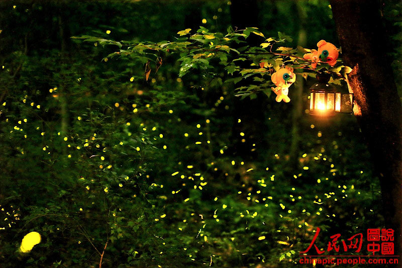 Come And See Fireflies In Nanjing This Summer 5 5