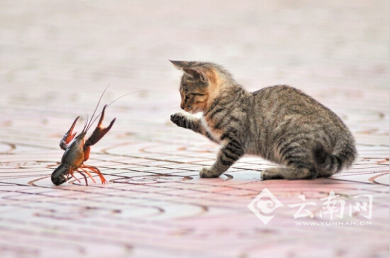 how to catch crayfish with a rod