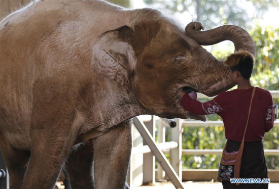 Chinese company signs agreement to build elephant protection center in Laos