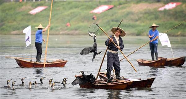 Cormorant fishing show on Suihe River