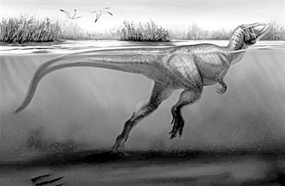 Fossils of swimming theropod dinosaurs unearthed in China - Headlines,  stories and photos from ecns.cn