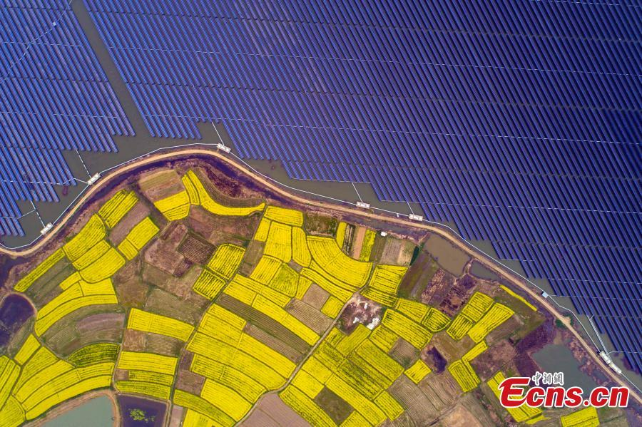 An aerial view of blooming rapeseed flowers next to a photovoltaic power station in Liangyuan Town, Hefei City, East China's Anhui Province, March 28, 2019.  The solar panels, installed in a reservoir, cover an area of 160 hectares and generated 110 million kWh of electricity in 2018. Since 2015, the solar park in the water has generated 4 million yuan($590,000)-worth of economic benefits for local farmers. (Photo: China News Service/Zhang Dagang)