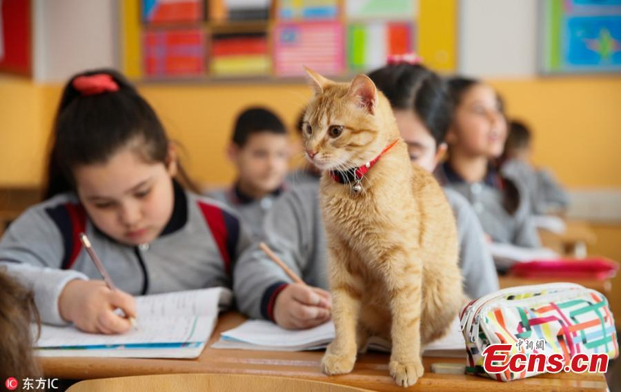 Tombi 'the classroom cat' returns to Turkish school
