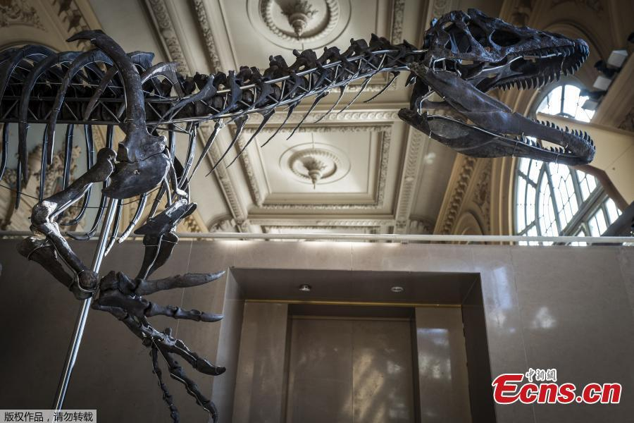 Dinosaur skeleton 150 million years ago goes up for auction