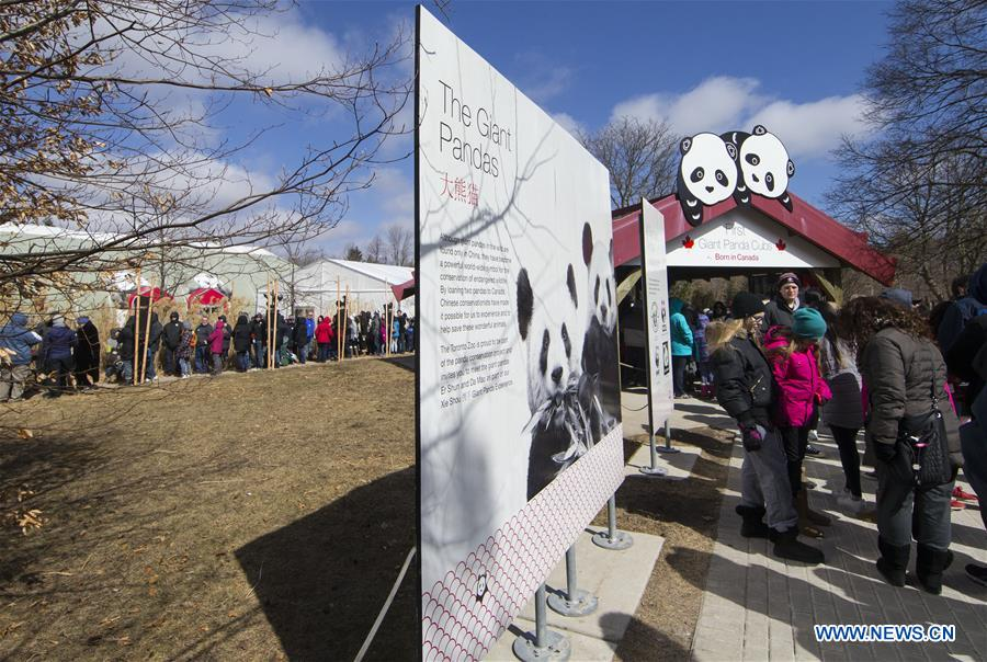 Giant pandas to be moved from Toronto Zoo to Calgary Zoo