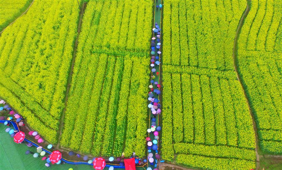 Tourists enjoy view of cole flowers in central China