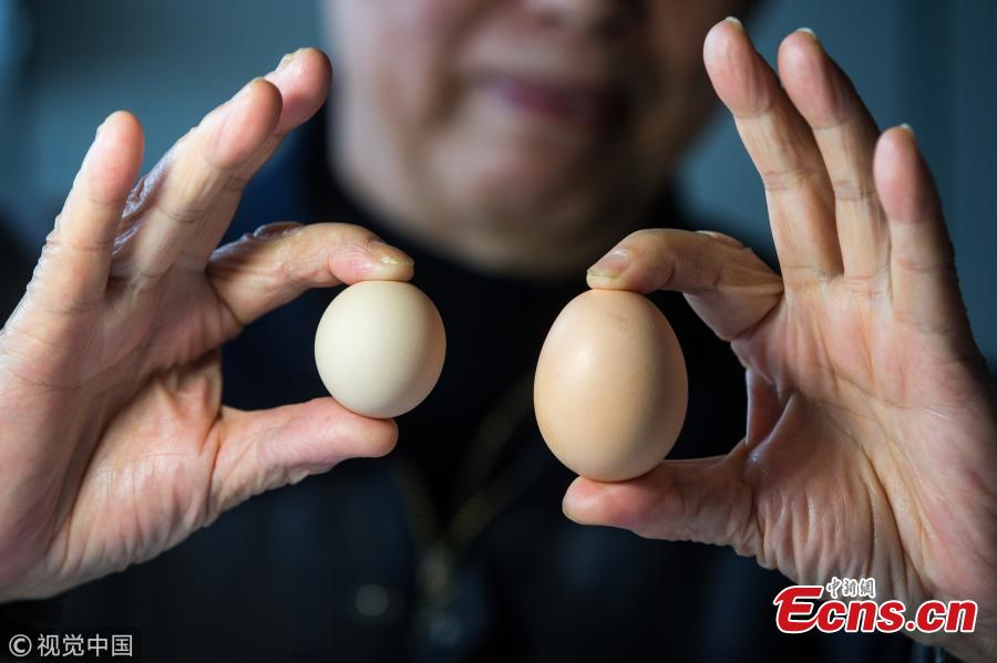 Billion-to-one discovery: round egg in Hangzhou
