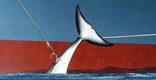 Japan calls it scientific research; brutal whaling is more like it